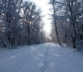 35-winter-am-see-18-1-13-44