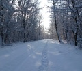 37-winter-am-see-18-1-13-45